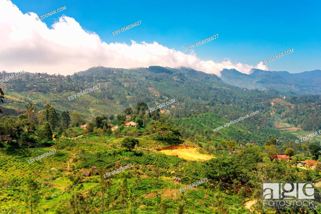 Stock Photo: View to the Horten Plains with clouds in the montane forest in the central highlands of Sri Lanka.