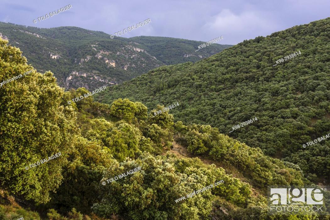 Imagen: encinar en la cuenca del rio Zumeta, sierra de las Huebras, Parque Natural de las Sierras de Cazorla, Segura y Las Villas, provincia de Jaén.