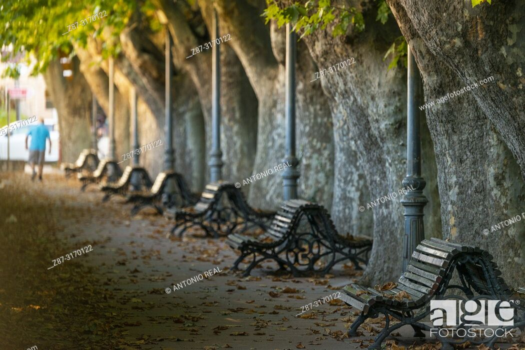 Stock Photo: Plane trees and benches along avenue in Riopar, Albacete province, Spain.