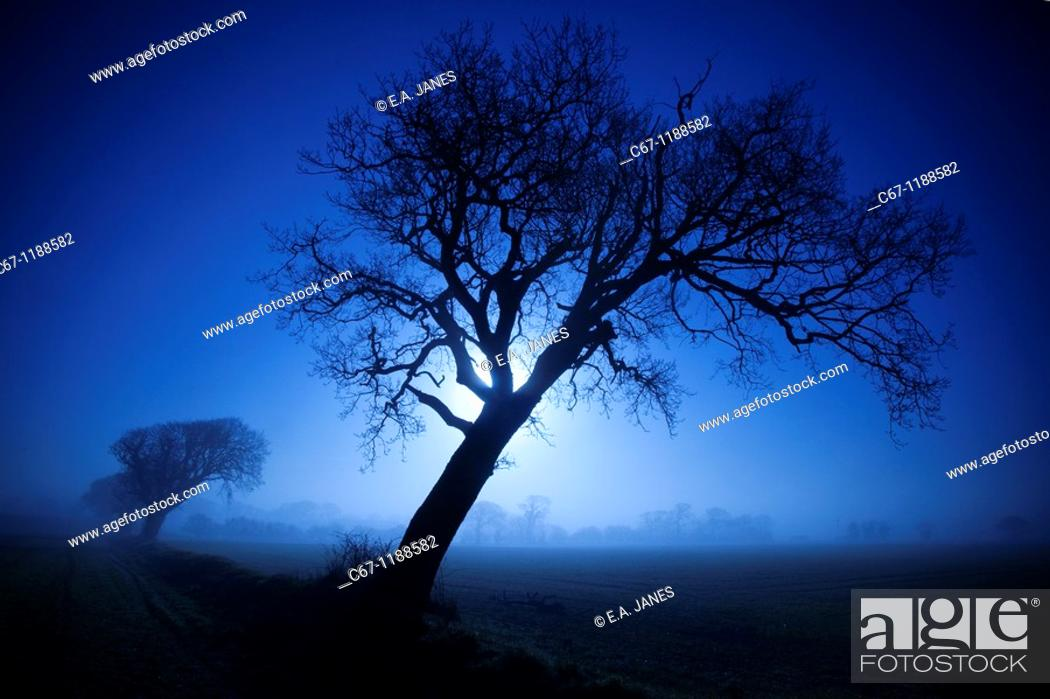 Stock Photo: Farmland Oaks & Rising Moon Norfolk December.
