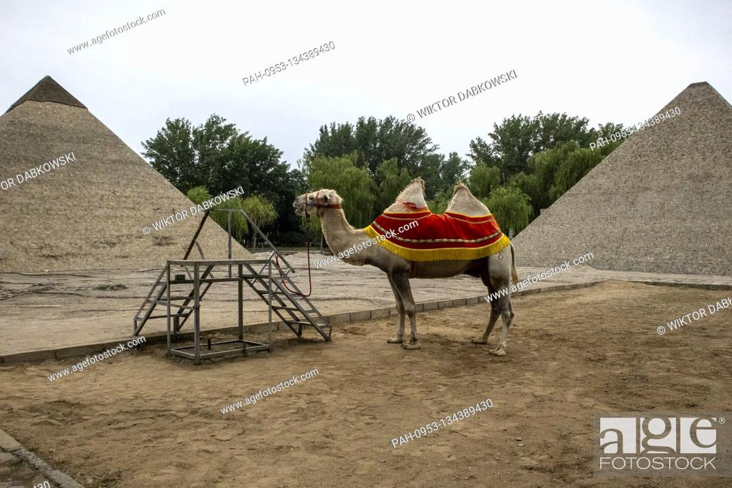 Stock Photo: Camel waits for the tourists at World Park in Beijing, China on 26/07/2020 Due to epidemic situation there are no tourists in Chinese capital.