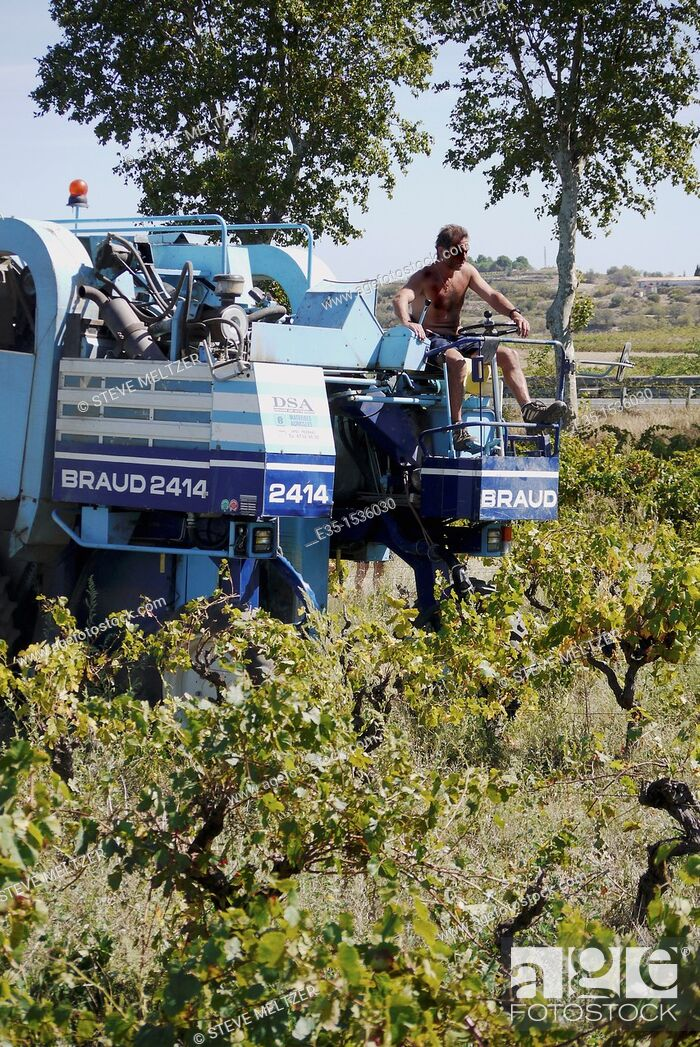 Stock Photo: Large grape harvesters are used in the vineyards Southern France, to pick the ripe grapes in September, for the 'vendage.'.
