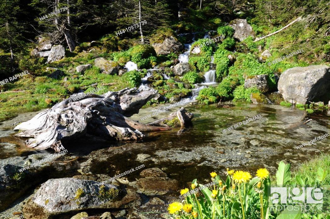 Stock Photo: Switzerland, Europe, Uri, Gurtnellen, Fellital, Fellibach, brook, waterfall, spring.