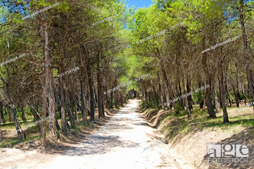 Stock Photo: Sierra de Espuna National Park, Region of Murcia, Spain, Europe.