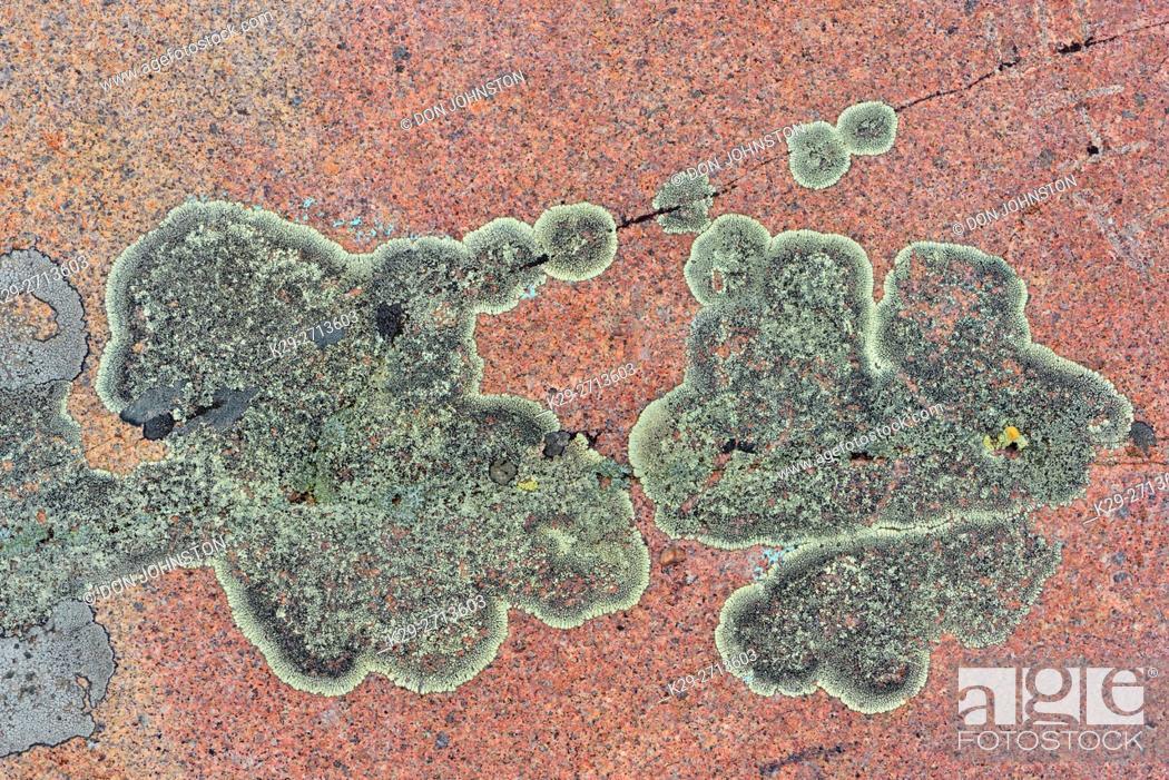 Imagen: Lichen colonies on Lake Superior shoreline granite outcrop, Rainbow Falls Provincial Park, Rossport, Ontario, Canada.