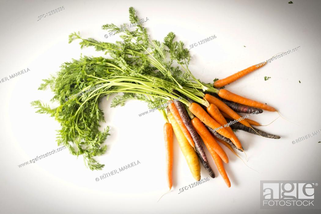 Stock Photo: A bunch of carrots and purple carrots with green tops.