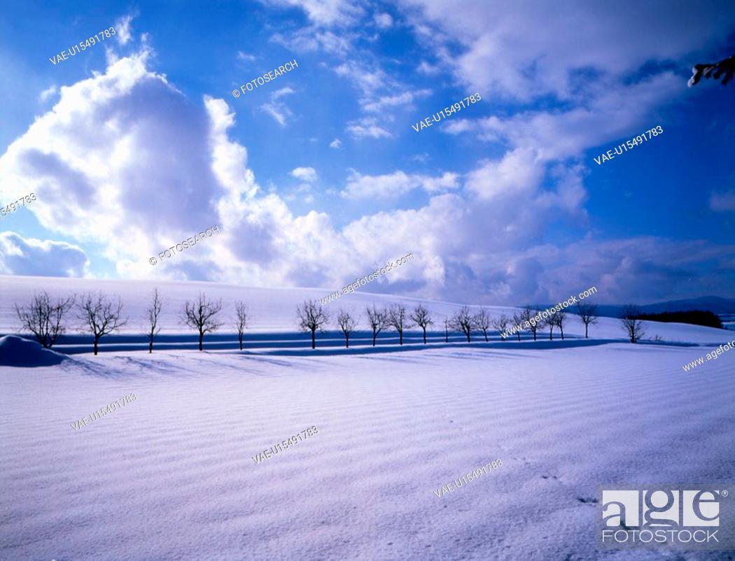 Stock Photo: snow, snow scene, tree, season, winter, sky, winter scene.