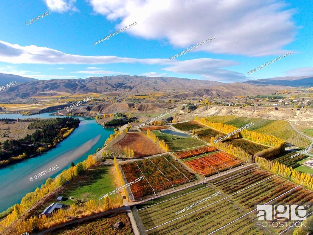 Stock Photo: Orchards, poplar trees, and Lake Dunstan, Bannockburn, near Cromwell, Central Otago, South Island, New Zealand, drone aerial.