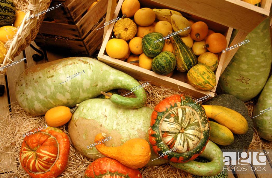 Stock Photo: Organic farming.