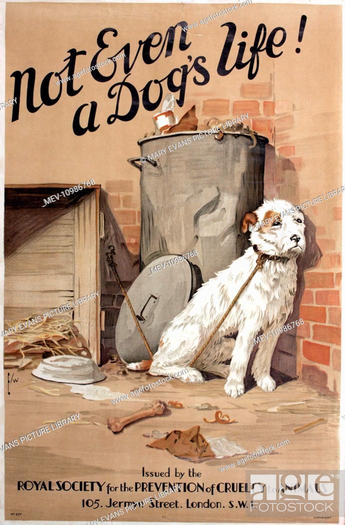 RSPCA Poster Not Even A Dogs Life Showing A Mistreated Dog