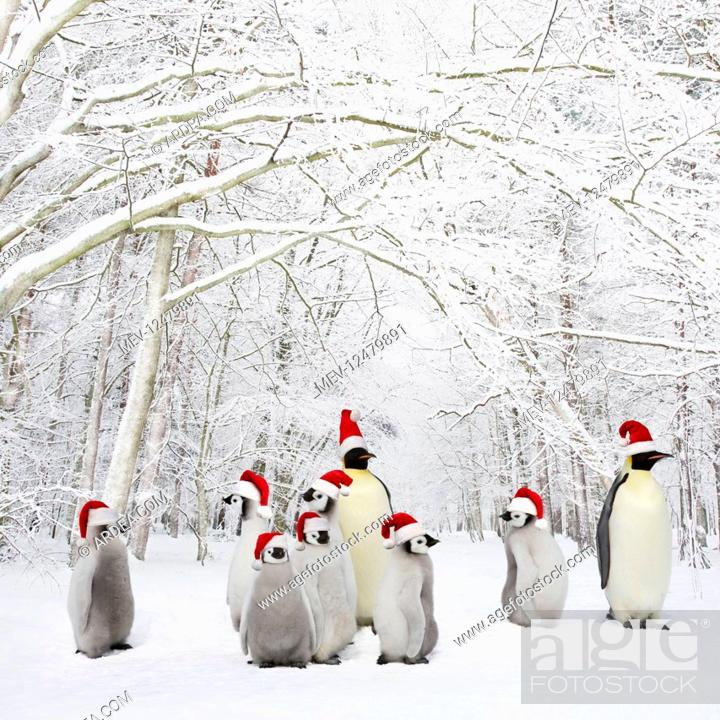 Stock Photo: Penguins wearing Christmas hats in Winter woodland with snow.