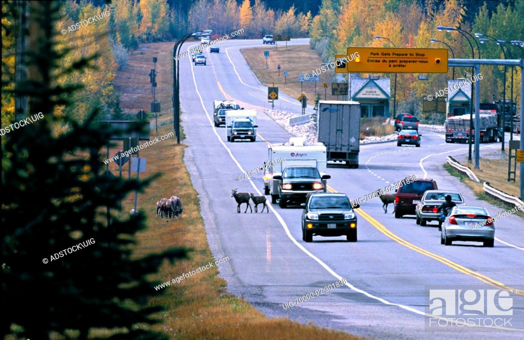 Stock Photo: A shot of the east gate of Jasper National Park with traffic and animals on the highway.