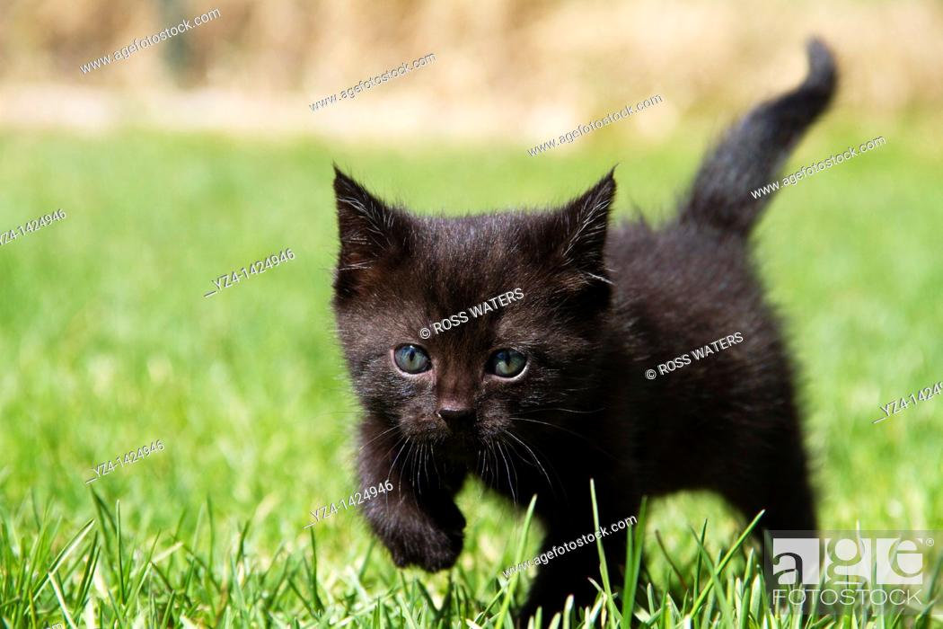 Stock Photo: Kitten Playing in the Grass.