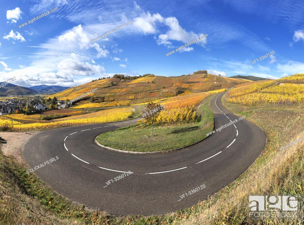 Stock Photo: hairpin bend along the Wine Route surrounded by vineyards of the Grand Cru in back ground the medieval village of Turckheim Alsace, France Europe.