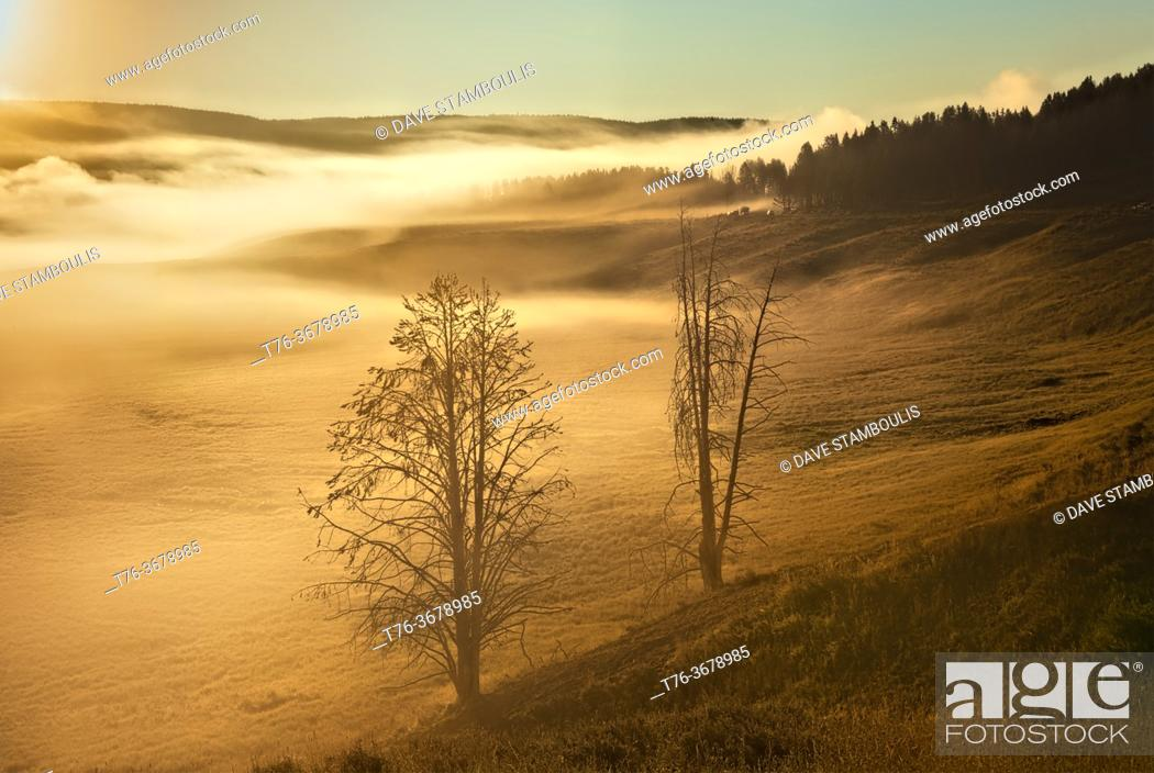 Stock Photo: Mist in the Hayden Valley at sunrise, Yellowstone National Park, Wyoming, USA.