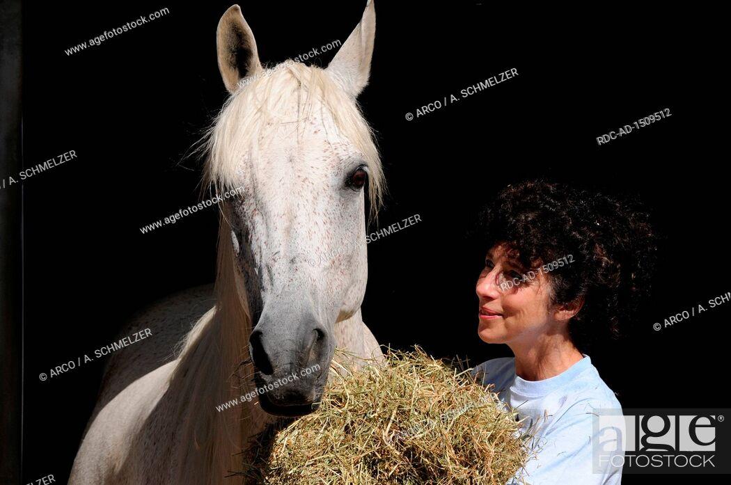 Stock Photo: Feeding Hay, woman feeding horse.