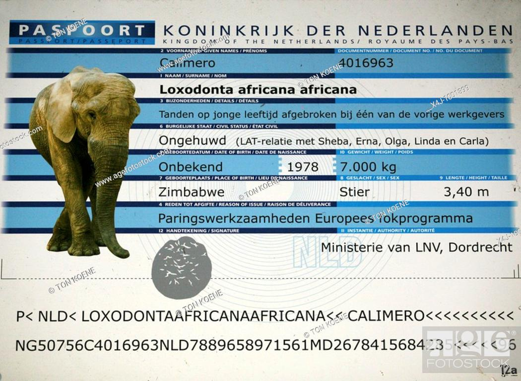 Stock Photo: zoo parc: Beekse bergen near Tilburg: Elephants.