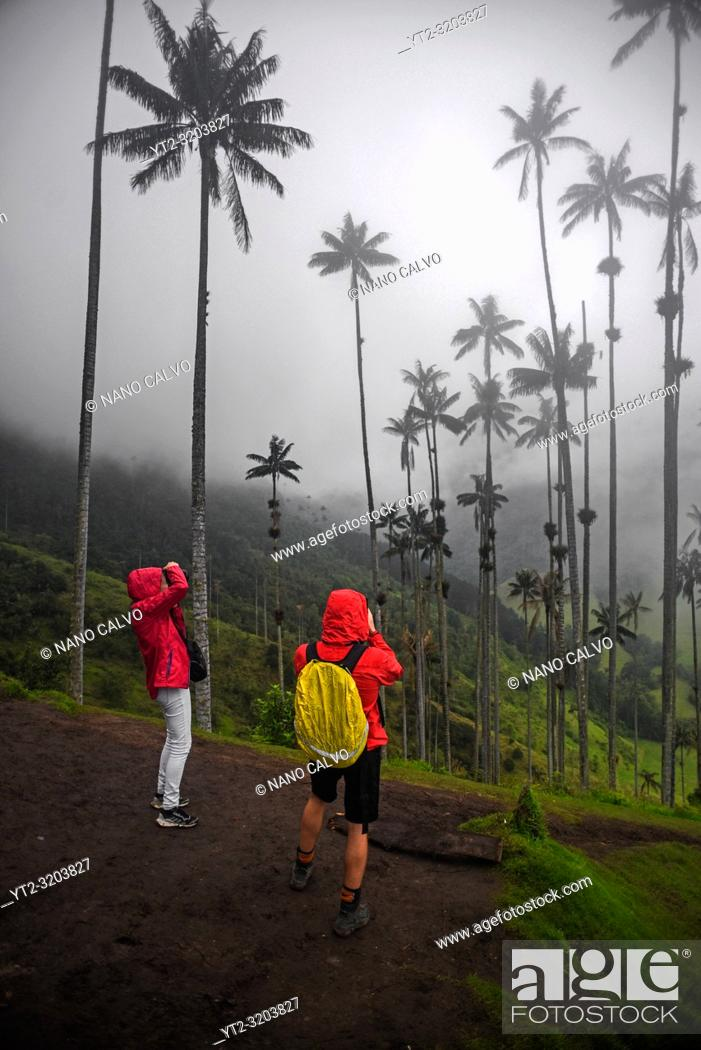 Stock Photo: The Cocora Valley (Spanish: Valle de Cocora) is a valley in the department of Quindâ. šo, just outside the pretty little town of Salento.