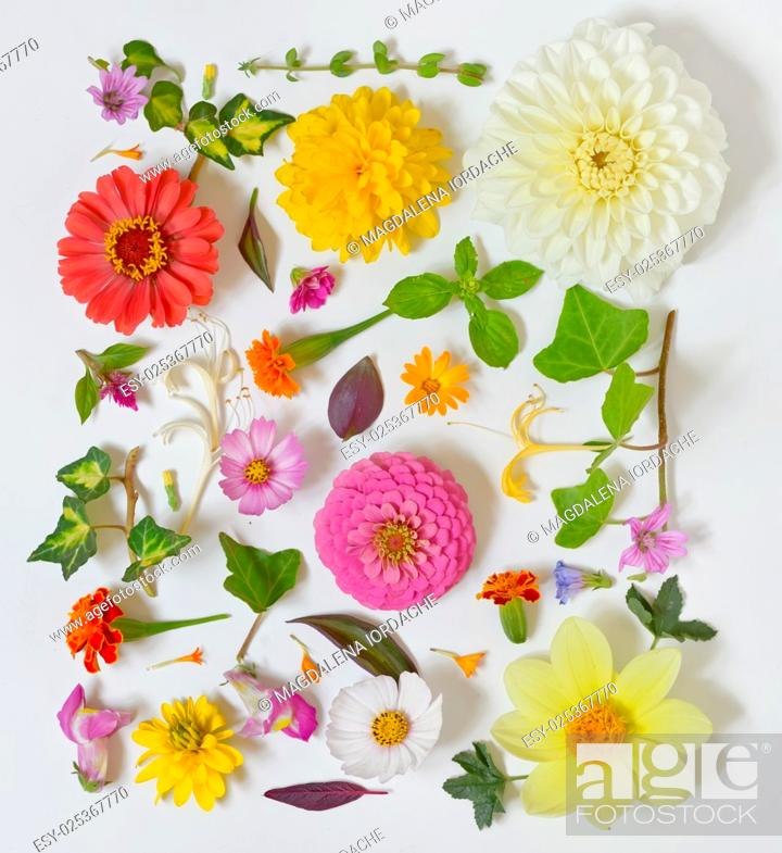 Stock Photo: Summer flowers pattern on white background.