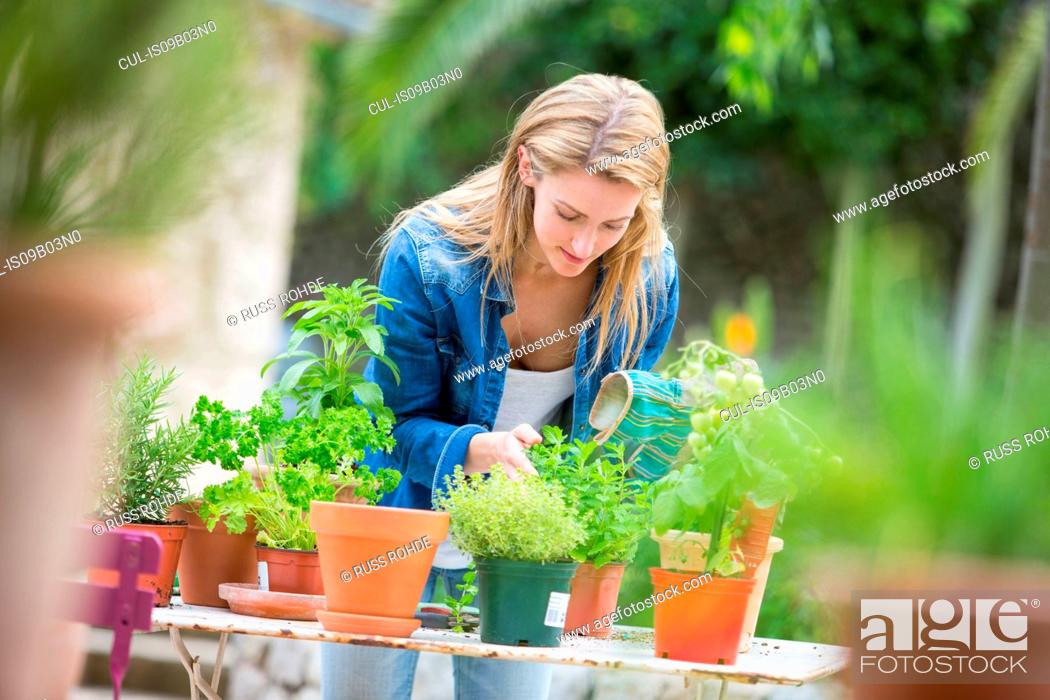 Stock Photo: Young woman tending herb plants at garden table.