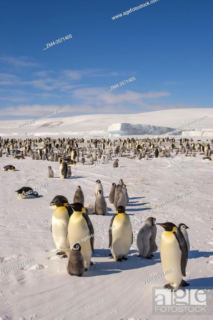Imagen: View of an Emperor penguin (Aptenodytes forsteri) colony on the sea ice at Snow Hill Island in the Weddell Sea in Antarctica.
