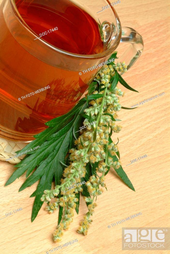 tea made of Mugwort - Wegwood - medicinal tea - herbtea - Artemisia