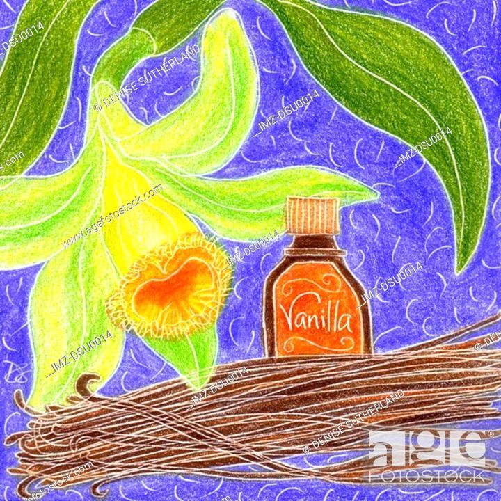 Stock Photo: vanilla and vanilla beans.