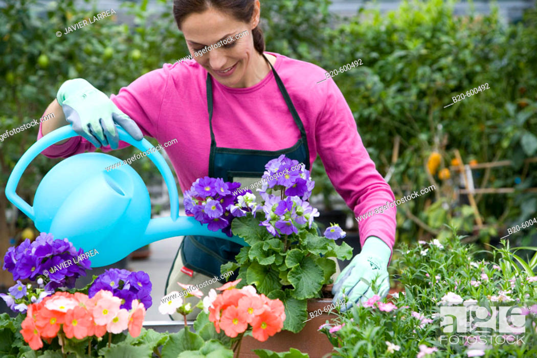 Stock Photo: Gardener watering flower pots. Garden, Tree nursery. Gipuzkoa, Euskadi. Spain.