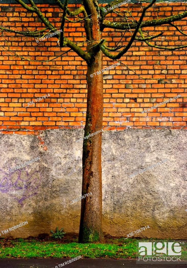 Stock Photo: Bare tree trunk and branches against urban brick wall.
