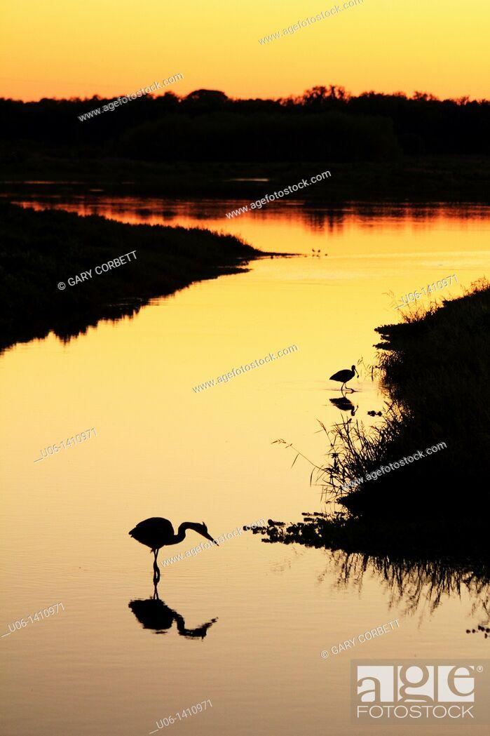 Stock Photo: Silouette of wading birds on the Myakka River, Florida, USA at sunset.