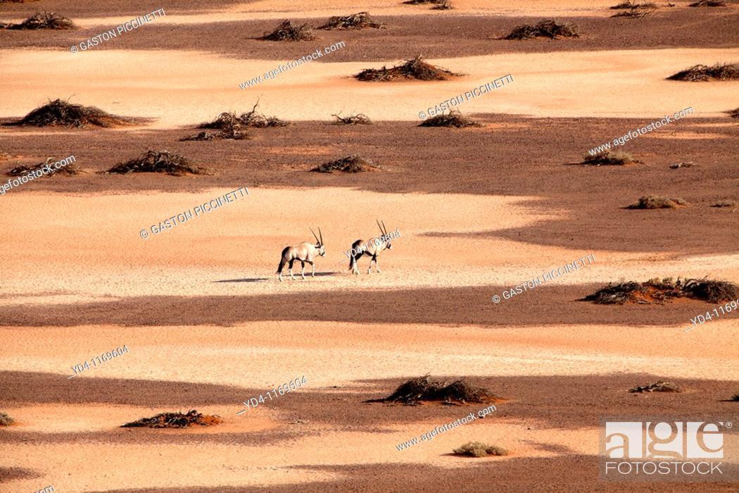 Stock Photo: Gemsboks Oryx gazella, walking through the Hidden Vlei, Namib-Naukluft National Park, Namib desert, Namibia.