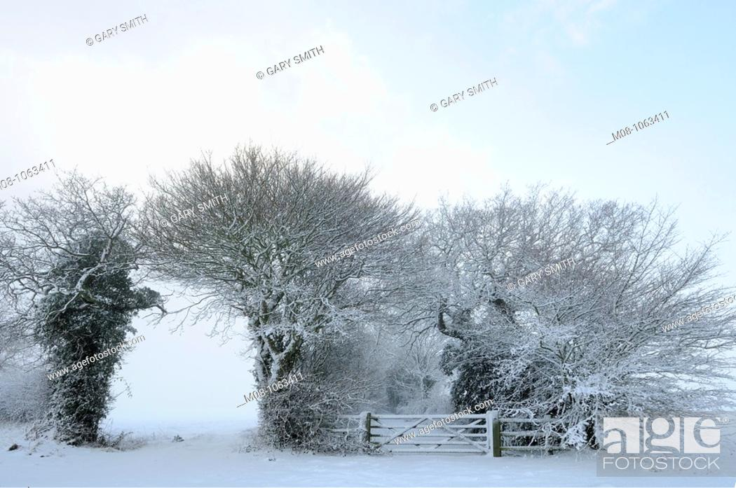 Stock Photo: Winter snow scene with farm gate and trees, Norfolk, UK December,.
