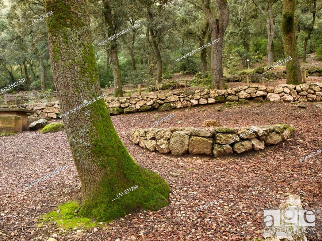 Stock Photo: Forest of quercus ilex in Font Roja Natural park, Alcoy, Alicante, Comunidad Valenciana, Spain, Europe.