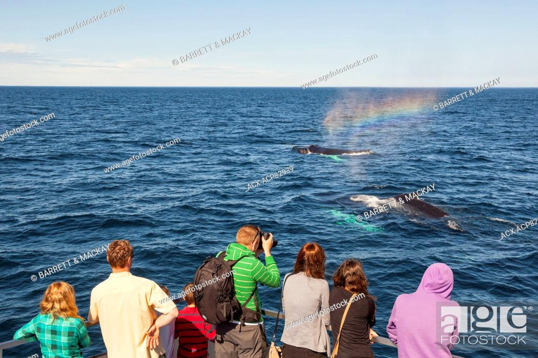Stock Photo: Humpback Whale spouting, (Megaptera novaeangliae), and whale watchers, Witless Bay Ecological Reserve, Newfoundland, Canada.
