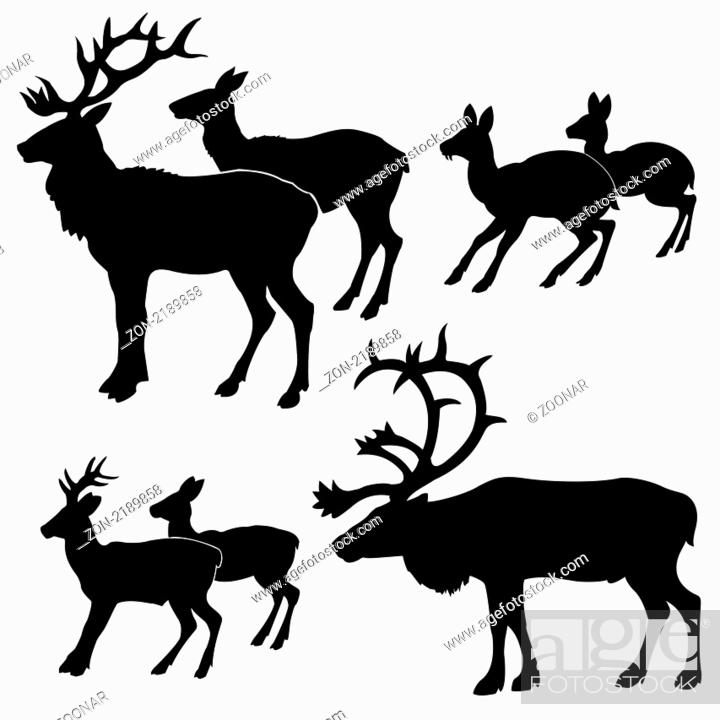 Stock Photo: vector silhouette of the deers on white background.