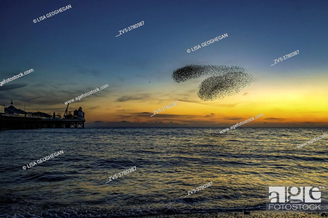 Imagen: Murmuration of the Starlings-Sturnus vulgaris at the Palace Pier, Brighton, East Sussex, England, Uk.