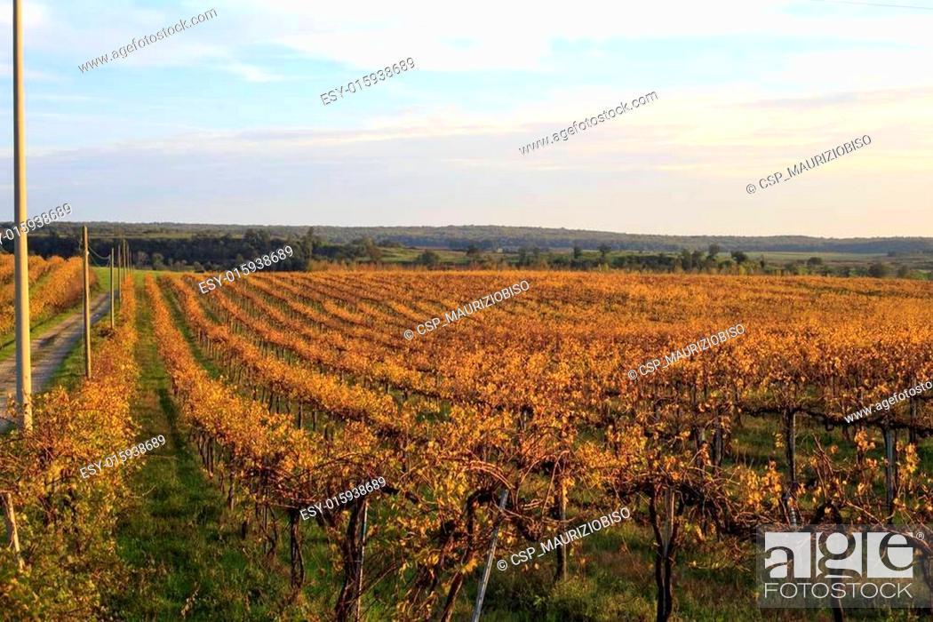 Imagen: Grapes landscape.
