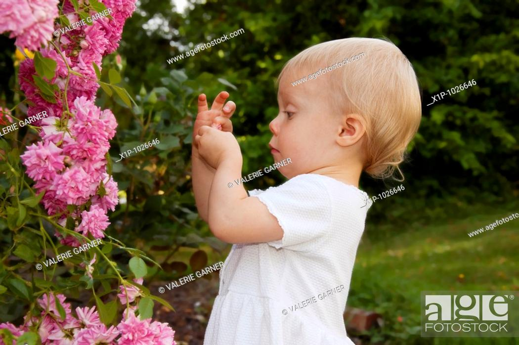 Stock Photo: This photo shows a cute toddler girl wearing a white dress and playing with minature pink climbing roses and a humourous expression as she's closely examining.