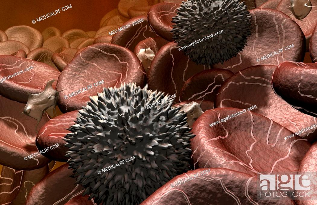 Stock Photo: Blood cells.