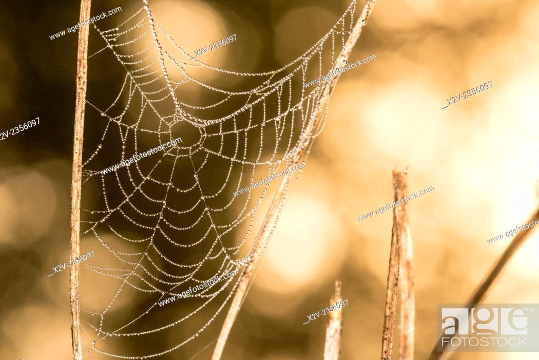 Photo de stock: Dew covered spiders web.