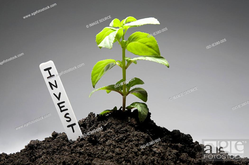 Stock Photo: Sapling with invest label.