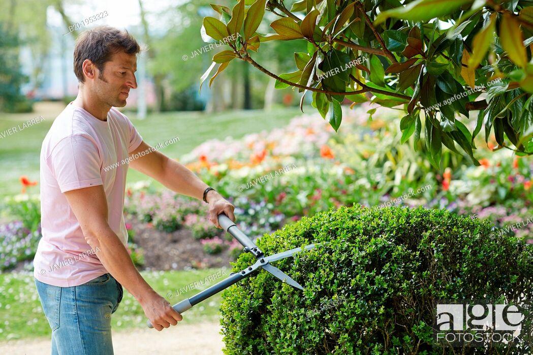 Imagen: Hedge trimmers, Hand tool, Garden, Gardener pruning bush.