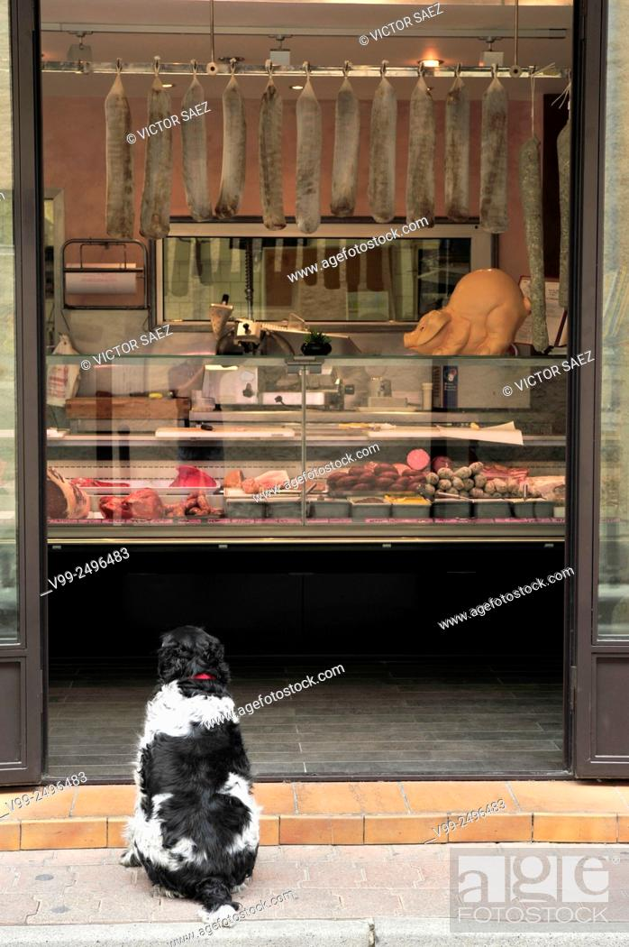 Stock Photo: dog in front of a butcher shop.