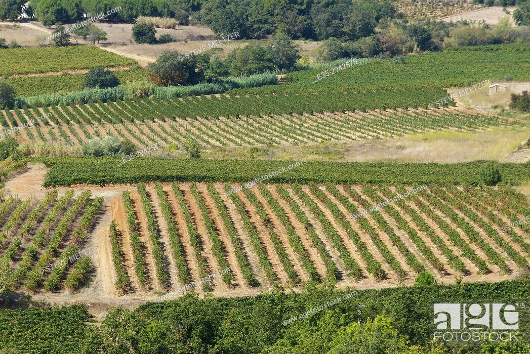 Stock Photo: Herault River valley vineyards looking North towards Alignon du Vent from Valros, France.