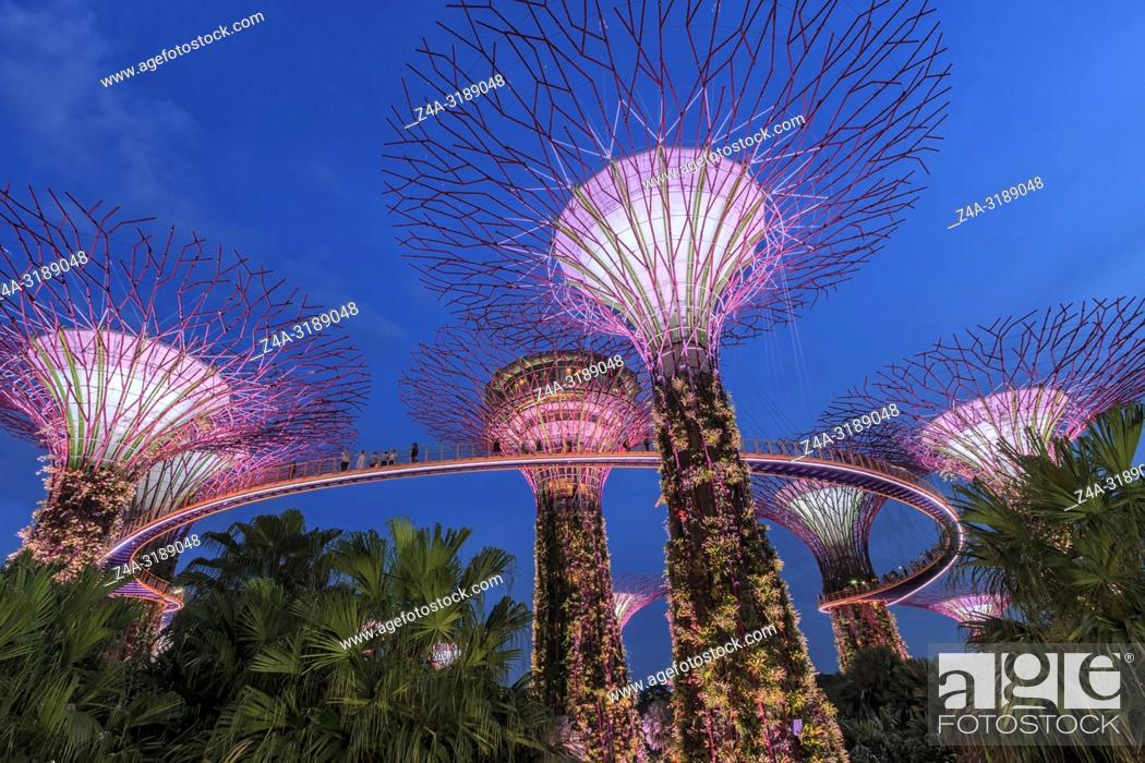 Stock Photo: Singapore, Singapore - October 16, 2018: Supetree Grove during the blue hour at the Gardens by the Bay in Singapore.