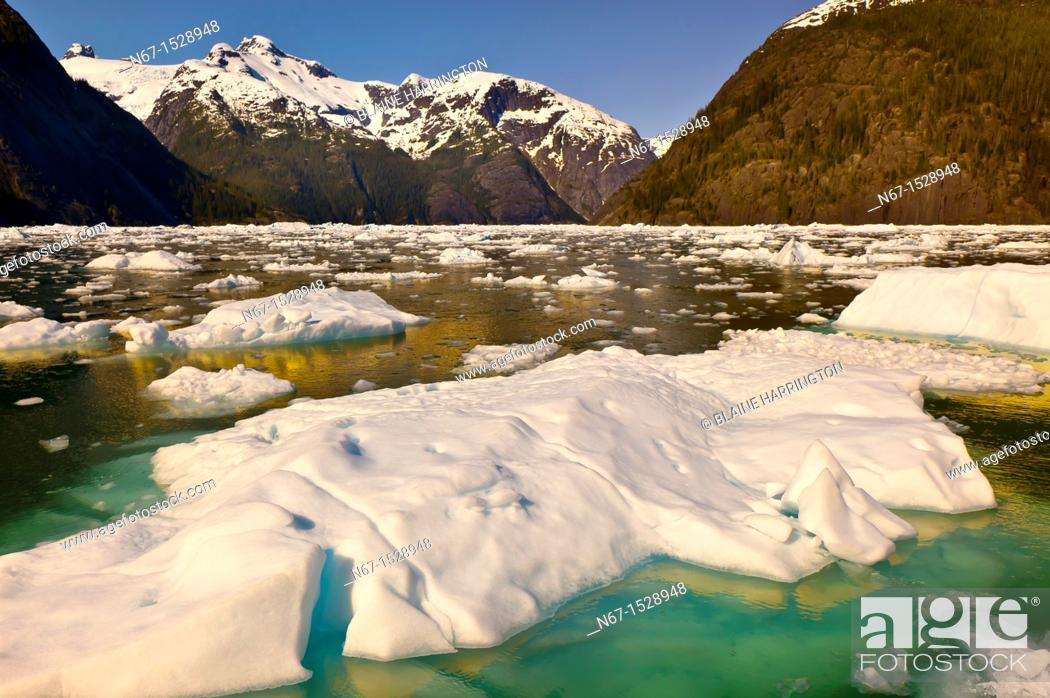 Imagen: Icebergs and ice floes, LeConte Bay near LeConte Glacier, between Petersburg and Wrangell, southeast Alaska USA.