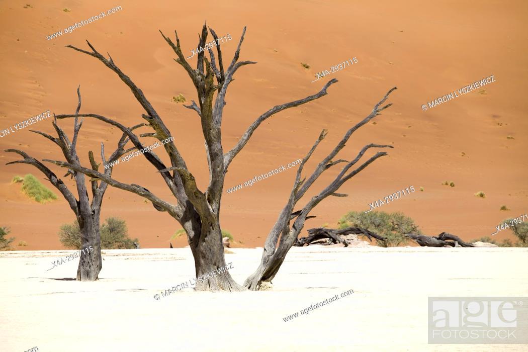 Stock Photo: Dead trees in the salt pan of Namib desert near Soussuvlei, Namib-Naukluft National Park, Namibia.