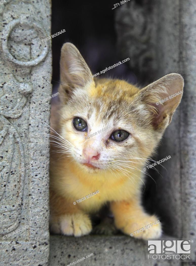 Imagen: Thailand, Bangkok, Wat Pho, kitten,.