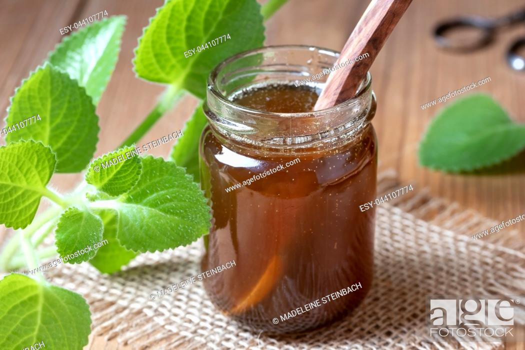 Stock Photo: A jar of silver spurflower syrup against common cold with fresh Plectranthus argentatus plant.