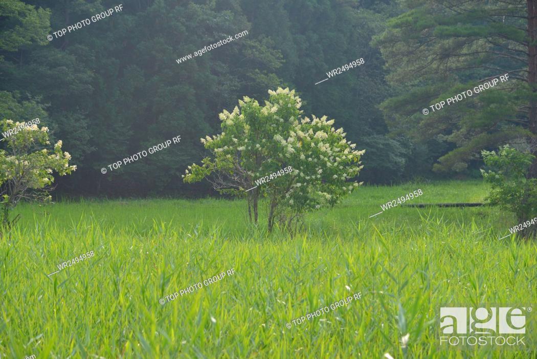 Imagen: Around Oboke Gorges, spot, Kurosawa wetlands , Tokushima County, Miyoshi City, Japan.